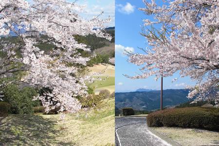 JGMゴルフクラブ 高崎ロイヤルオークコース(群馬県)