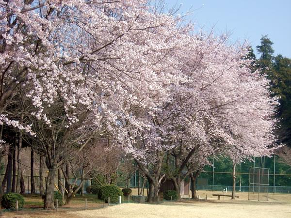 南筑波ゴルフ場(茨城県)