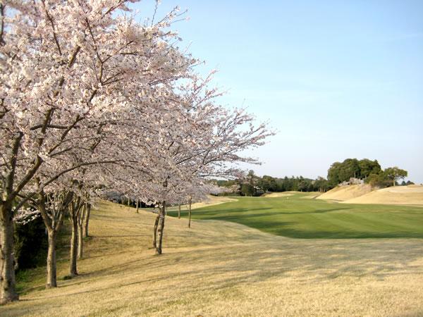 千葉桜の里ゴルフクラブ(千葉県)