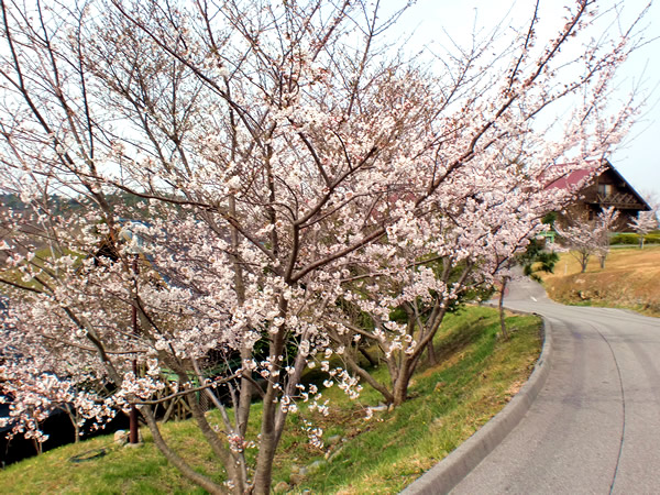 吉川ロイヤルゴルフクラブ(兵庫県)