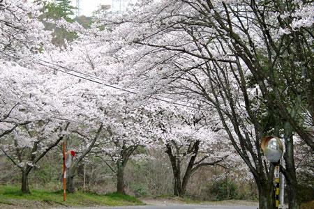 吉野カントリークラブ(奈良県)