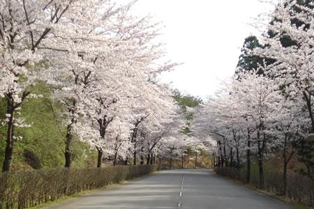 山代ゴルフ倶楽部 キングコース(石川県)