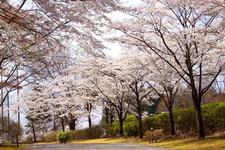 ファイブエイトゴルフクラブ(栃木県)