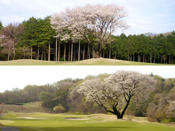 琵琶池ゴルフ倶楽部(栃木県)