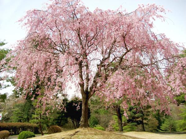 風月カントリー倶楽部(栃木県)