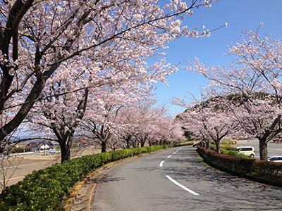 桜ゴルフ倶楽部の写真