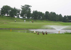 ゴルフ5カントリー かさまフォレスト(旧:かさまフォレストゴルフクラブ)...