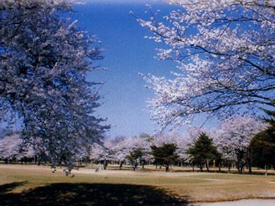 玉村ゴルフ場