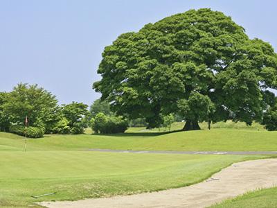 もおか鬼怒公園ゴルフ倶楽部 いちごゴルフクラブ